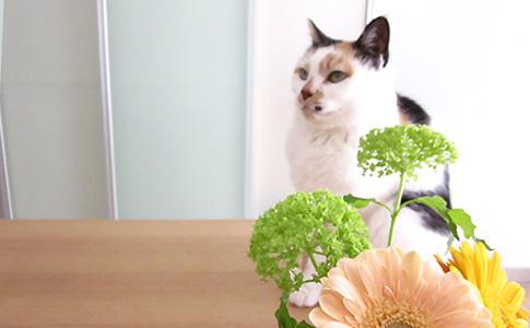 ふーたんとお花 その2