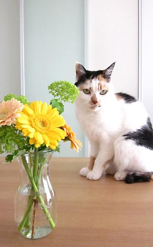 ふーたんとお花 その1