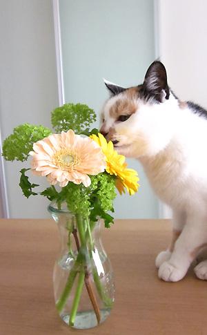 ふーたんとお花 その3