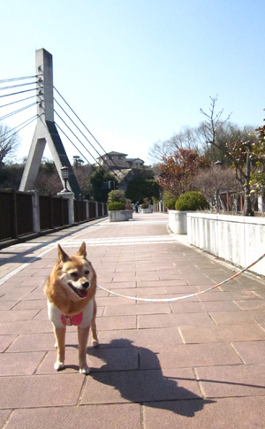 旧秩父橋(あの花の舞台)