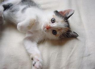 子猫のふーたん