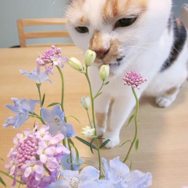 ふーたんとお花