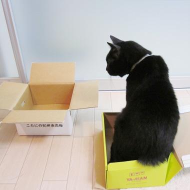 どちらの箱に入るか悩むまーさん